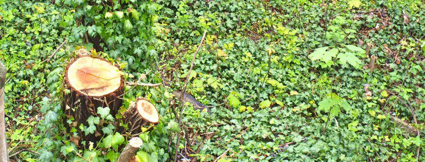 Häcksler Test im Garten